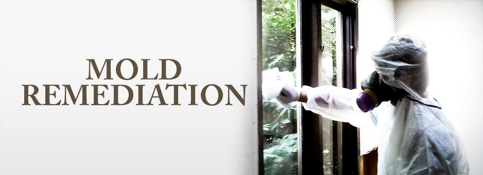 Mold-Remediation