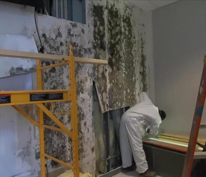 commercial-mold remediation