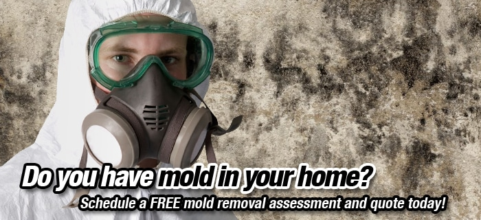 free-home-mold-removal-quote